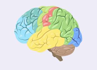 Dein Gehirn