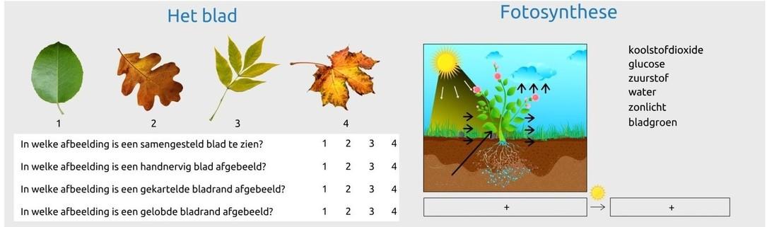 Biologie: planten