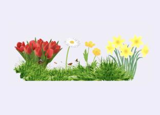 Hallo voorjaar!