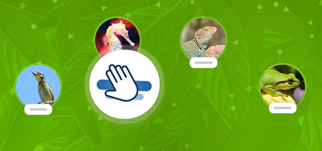 Match de dierencategorie